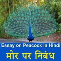 Essay on National Bird Peacock in Hindi