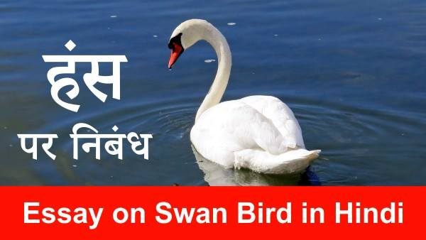 Essay on Swan Bird in Hindi