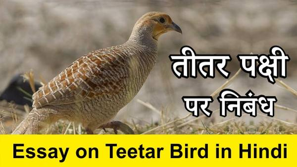 Essay on Teetar Bird in Hindi