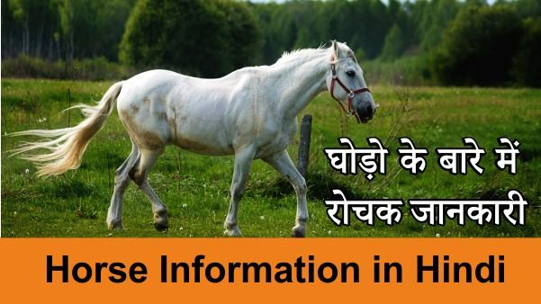 Horse Information in Hindi
