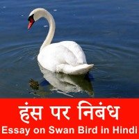 Swan Bird information in Hindi