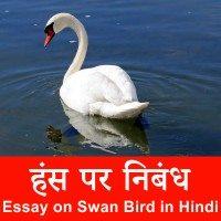 Swan Bird information in Hindi