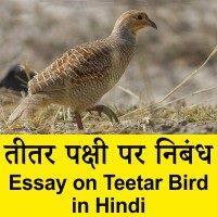 Teetar Bird par nibandh