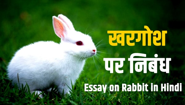 Essay on Rabbit in Hindi