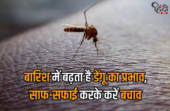 barish me badhta hai dengue ka prabhav